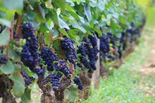 БУРГУНДИЯ - букет традиций, старины и винодельчества